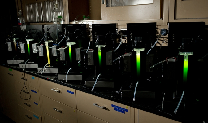 MSU Partners With ExxonMobil On Algae Biofuel Research
