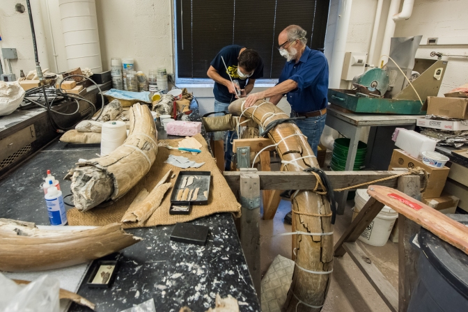 Mammoth On Display At UM Could Rewrite Michigan's Prehistory Books